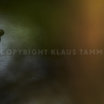 KT1_6418 1Schwarzsp900